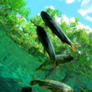 ALERTA FONASC – BONITO MS –  Divulgar  e proteger os banhados de Bonito é garantir vida, economia e natureza.